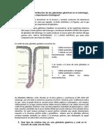 laboratorio - secrecion gastrica.docx