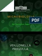 VEILLONELLA PARVULLA.pdf