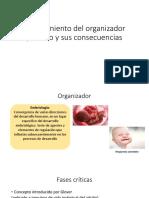 El Surgimiento Del Organizador Primero y Sus Consecuencias