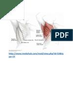Upper Limb.docx