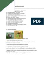 Plagas de los cultivos hortícolas.docx
