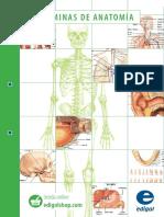 Catalogo Anatomia Edigol