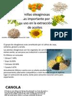 oleaginosas mas importantes para la extracción de aceites