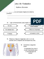 sistemaexcretor-120111121732-phpapp02