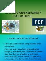 ESTRUCTURAS CELULARES YDIFERENCIAS.pptx
