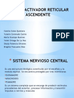 (NEURO) Sistema Reticular 2 3 (1)