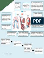 Intercambio de Gases Pulmonar