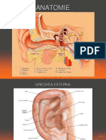 1.Anatomie
