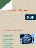 Presentación Biología Células Madres(1)