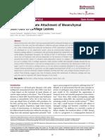β1 integrins mediate attachment of mesenchymal stem cells to cartilage lesions.pdf
