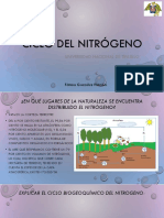 Ciclo Del Nitrogeno Diapositivas