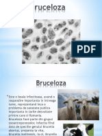 Bruce Loza