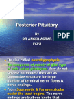 Posterior Pituitary