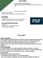 Anatomia 14 - Arterias , Venas y Nervios MS [Reparado]