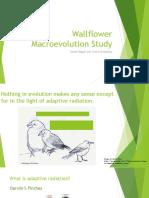 wallflower macroevolution study