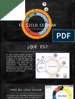 EXPOSICIÓN-EL-CICLO-CELULAR (1).pptx