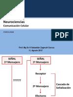Comunicación celular Fono.pdf