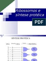 Retículo endoplasmatico