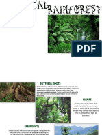 Geography Tropical Rainforests