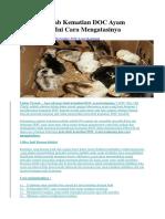 Apa Penyebab Kematian DOC Ayam Kampung