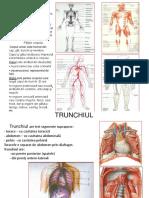 Curs Anatomie 2014.pptx