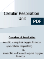 Cellular Respiration 1 (1)
