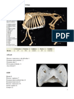 Guia Osteologia Bovino 1