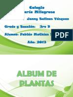 albumdeplantas-130606001753-phpapp01