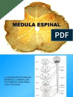 Medula[1]
