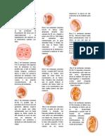 etapas del embarazo.docx