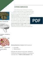 Funciones Del Cerebro Humano