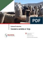 Ganaderia Camelida en Tarija