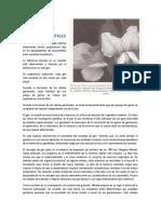 2.- Análisis Mendeliano 21.pdf