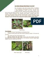 PenggunaanTumbuhan Hutan Sebagai Ubat Disaat