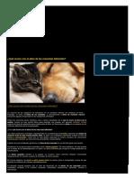 Que Ocurre Con El Alma de Las Mascotas Fallecidas