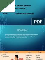 PPT Biologi Sistem Organ
