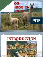 camelidos.pptx