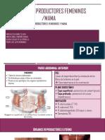 Anatomia de Organos Sexuales Femeninos y Mama