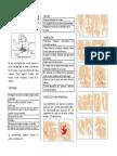 Boletin Sindrome Del Tunel CarpianoRRR