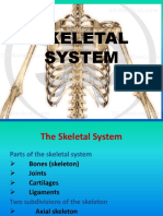 Tabar Skeletal System