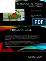 Producción de lechuga hidropónica_CALIFICADO.pptx