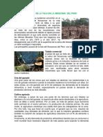 Causas de La Tala en La Amazonia Del Peru