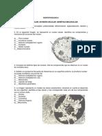 evaluacion nucleo celular genetica  molecular.docx