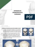 Tema 1 Diferencias Craneofaciales