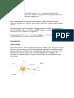 Sist Nervioso (Neurofisiologia y Psicofisiologia) (1)