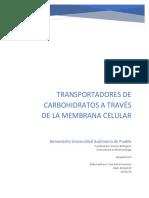 Transportadores de Carbohidratos a Través de La Membrana Celular