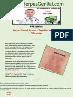 Herpes Genital Granos o Espinillas Genitales Diferencias