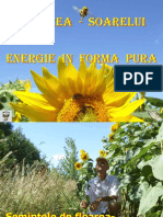 Floarea Soarelui Energie in Forma Pura
