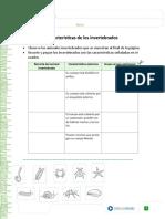 CARACTERÍSTICAS DE LOS INVERTEBRADOS.doc