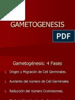 01 Gametogénesis